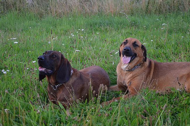Hunde auf dem Ferienhof