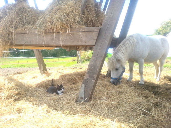 Katze und Pony