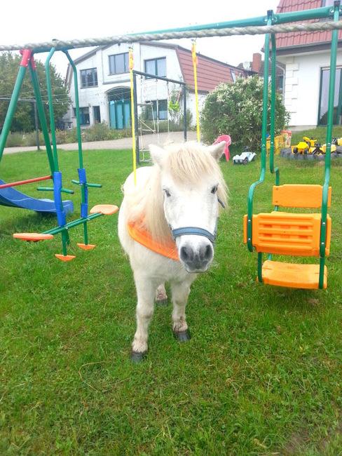 Pony auf dem Spielplatz